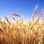 Spreco di cibo e impatto ambientale
