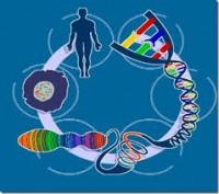 Il genoma semplificato