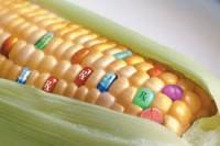 OGM senza rischi