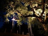 Dormire_su_albero_Italia_Tree_sleeping