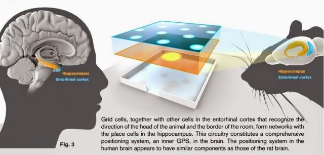 GPS cerebrale