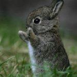 Coniglietto1