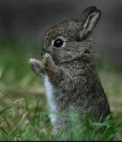 Il coniglietto