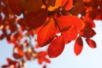 Sotto l'albero arancione