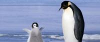 Il santuario per foche e pinguini