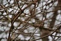 Altre sfumature d'inverno