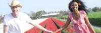 A Milano come in Olanda. Sbocciano 250.000 tulipani