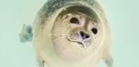 WWF Amazzonia: scoperte 381 nuove specie!