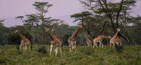 Nasce in Africa la più grande struttura vivente mai realizzata dall'uomo