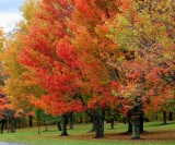 Fall-Color-Trees-2