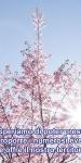 Spring-733507_1280
