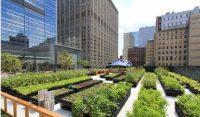 Città verdi: il piano della Fao