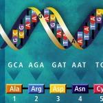 basi nucleotidiche