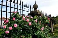 Il roseto della Villa Reale