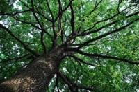 Verdi vite di alberi spezzati