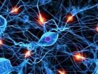 Il misterioso fascino dei neuroni