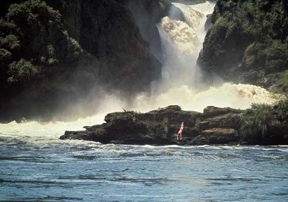 Cascate Murchison, Nilo Vittoria, Uganda. Giugno 1966