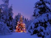 E' Natale senza albero e presepe?