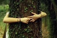 Abbracciare un albero fa bene alla salute