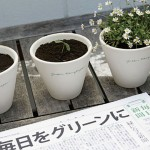 The-Mainichi-Newspaper-pianta-ecologia