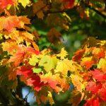 acero-autunno