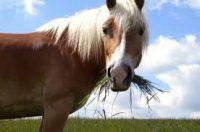 Hop hop cavallo, hop hop