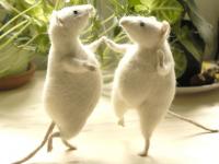 In mancanza del gatto…via alle danze dei topi