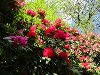 Le meraviglie di Madre Natura a Villa Carlotta
