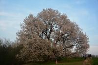 Racconti di primavera N.8