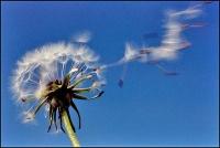 Il soffio e il vento