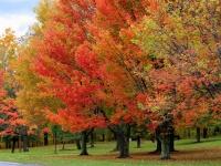 Foliage: l'abbraccio caldo dei colori autunnali