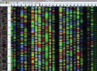 La banca del DNA dei neonati: il futuro che bussa alle porte
