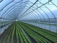 Serre in Lombardia: una crescita incontrollata