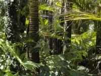 Amazzonia, una foresta da 'coltivare'