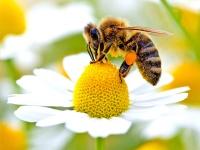 Missione possibile: salvare le api