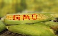 Il muro degli OGM