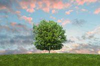 Tre passi avanti sull'ambiente